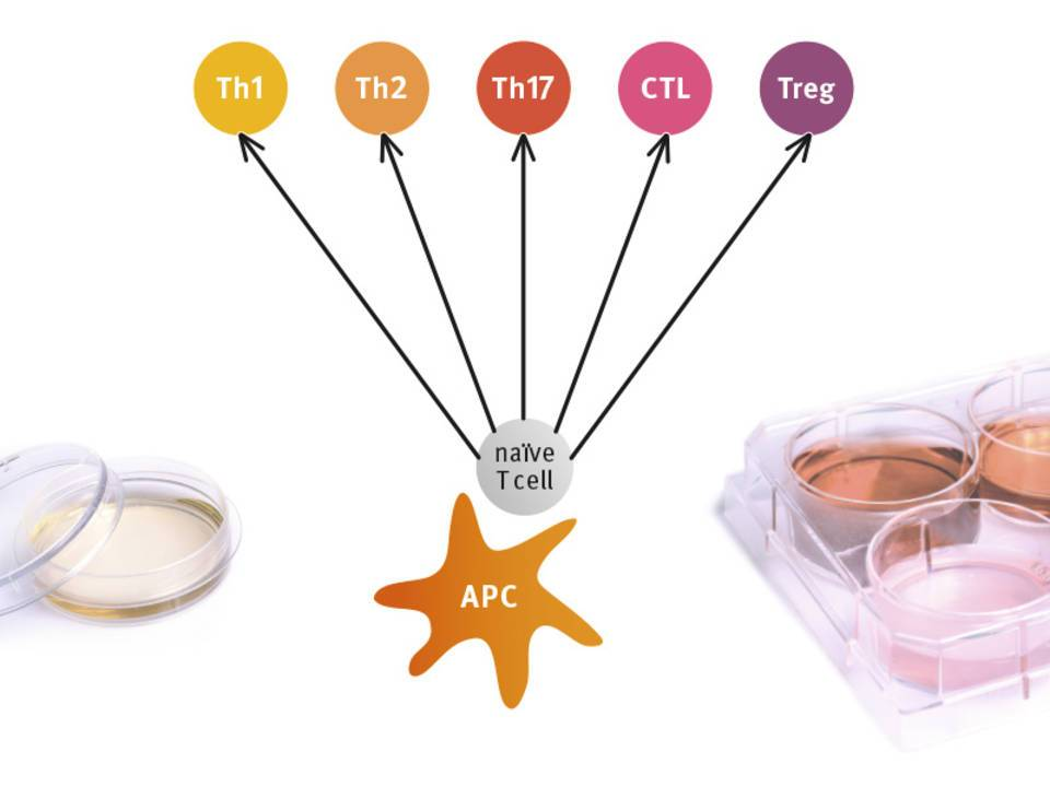 NEW: LUNARIS Human T Cell Characterization Kit